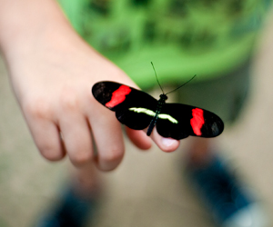 Butterly on finger