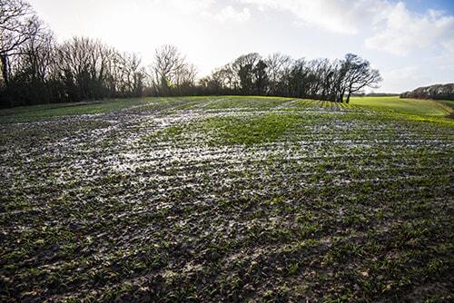 Water-bogged land