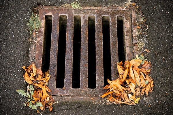 A gully grate with autumn leaves.