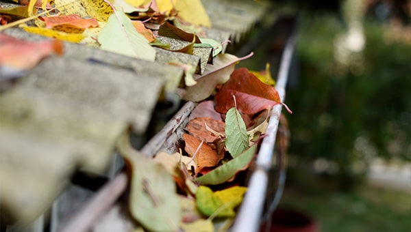 Autumn leaves within a black gutter.